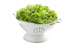 Arugula Salad with Tuna